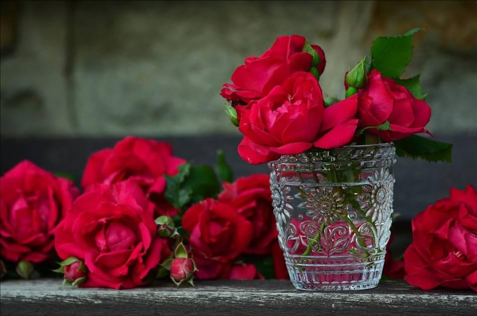 Hildegard Knef – Für mich soll's rote Rosen regnen | Didaktisierung für DaF